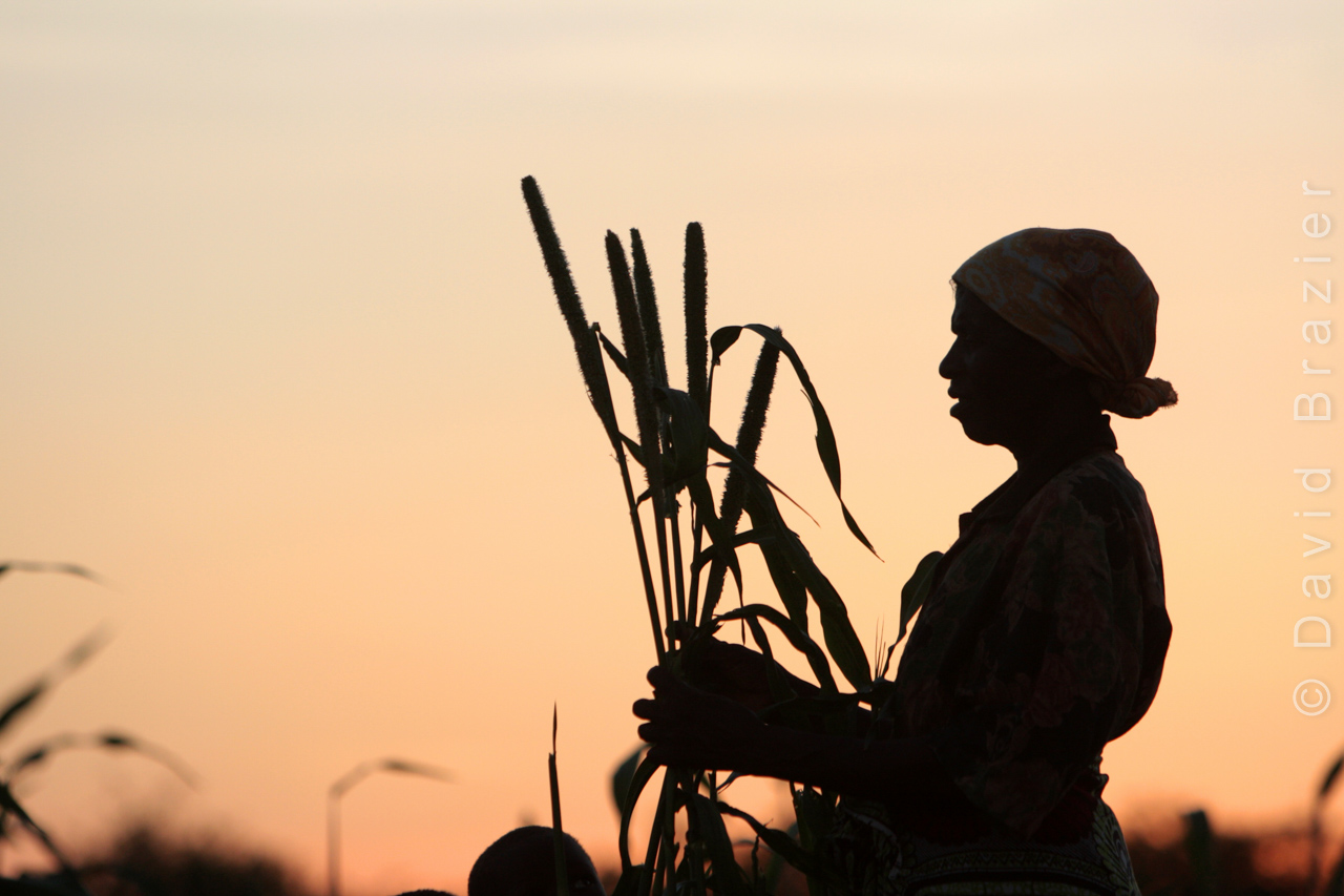 Silhouette of Zimbabwean woman holding millet