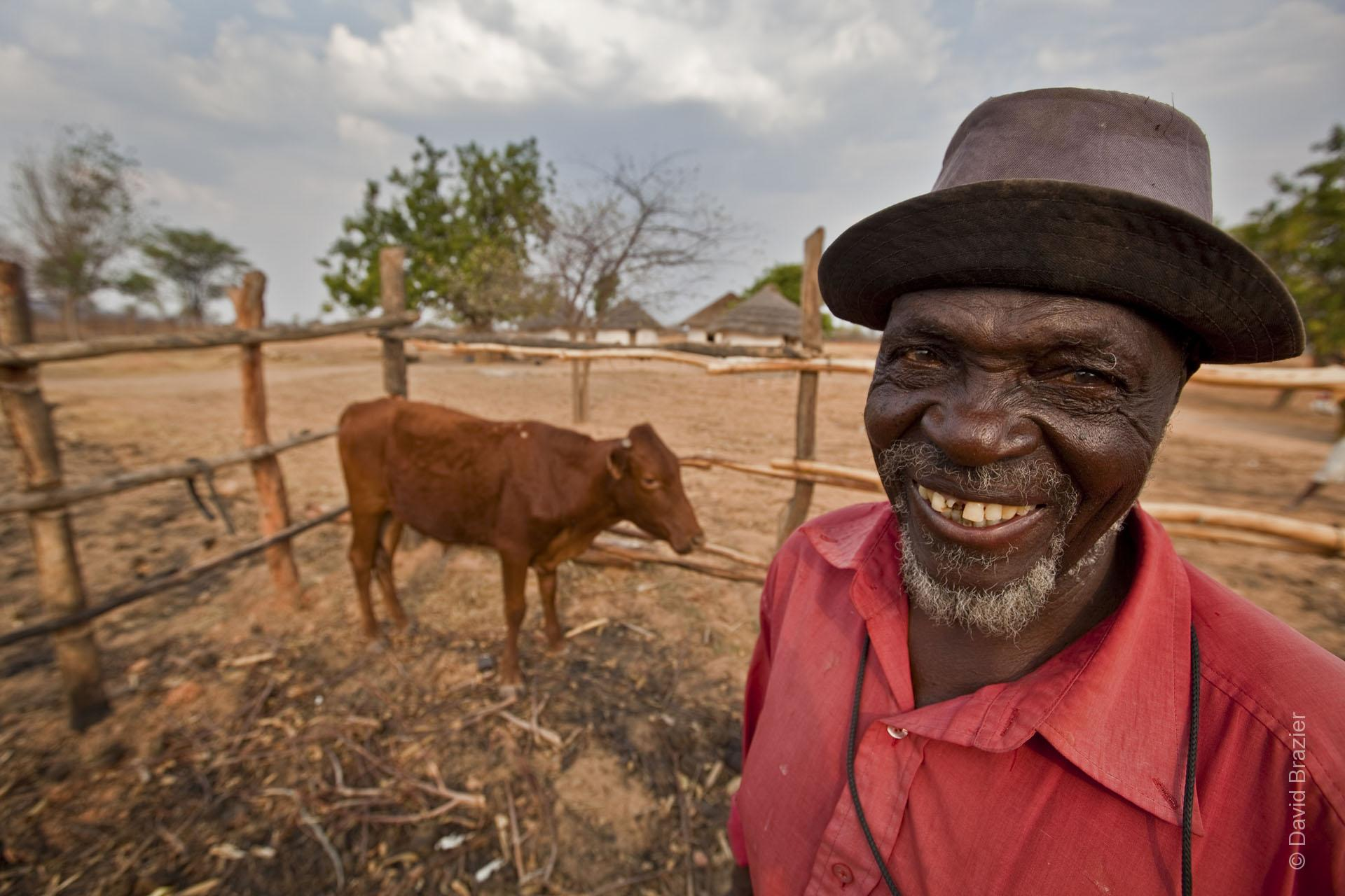 Elderly African man standing and smiling in cattle kraal with his brown cow