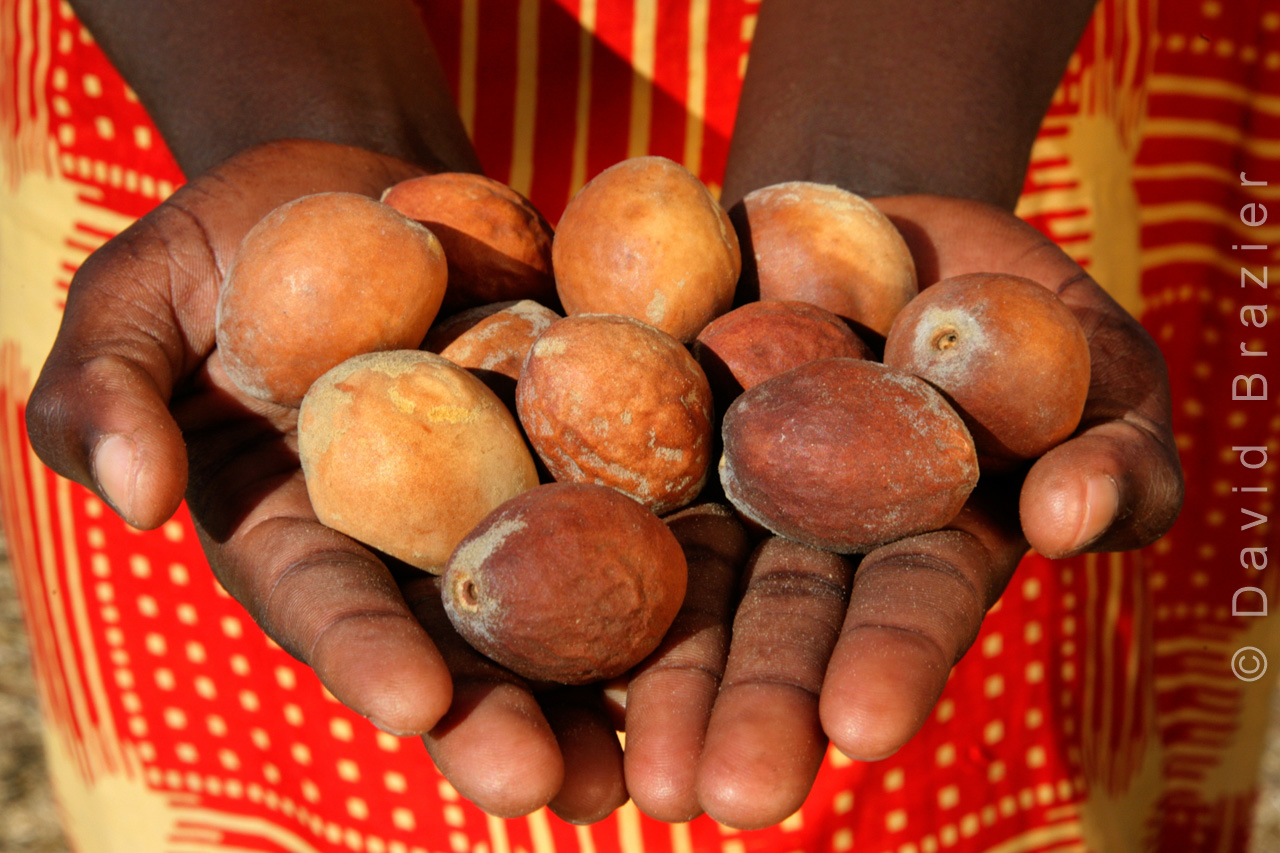 Mungongo nuts in woman's hands